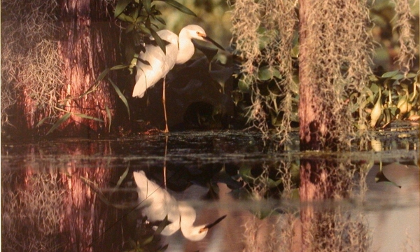 <p>Julia Sims, <em>Backwater Reflections,</em> c. 1990, photograph. 29¾ x 39 inches. 1999.003.001.</p>